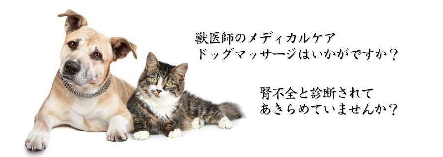いむか PET OFFICE